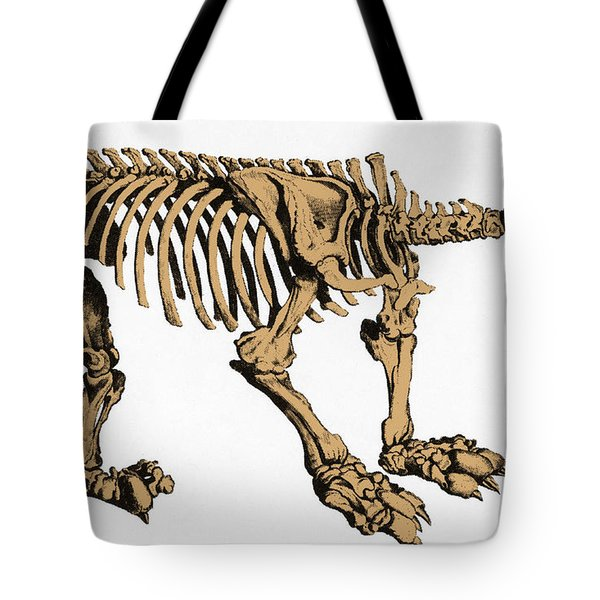 Megatherium, Extinct Ground Sloth Tote Bag by Science Source