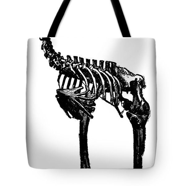 Moa Skeleton Tote Bag by Granger