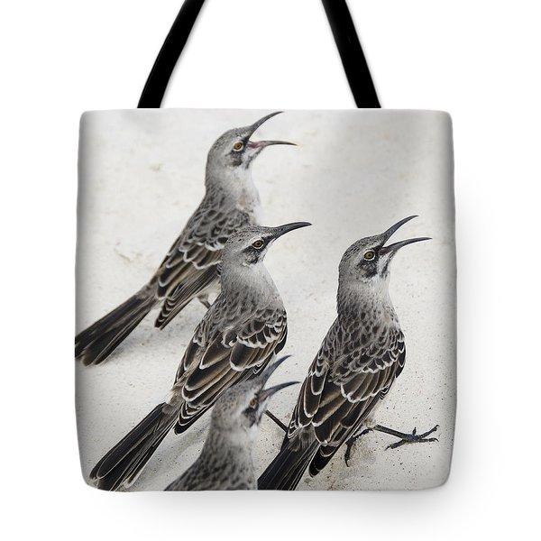 Mockingbirds Mimidae Galapagos, Equador Tote Bag by Keith Levit