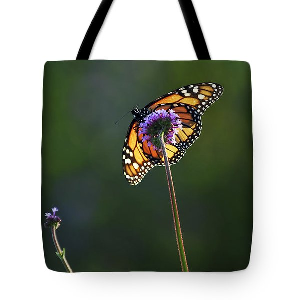 Monarch butterfly Tote Bag by Elena Elisseeva