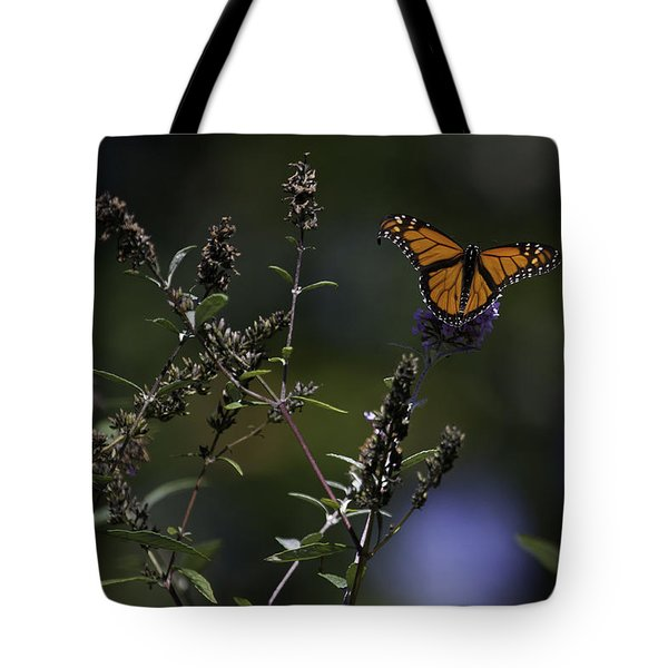 Monarch In Morning Light Tote Bag by Rob Travis