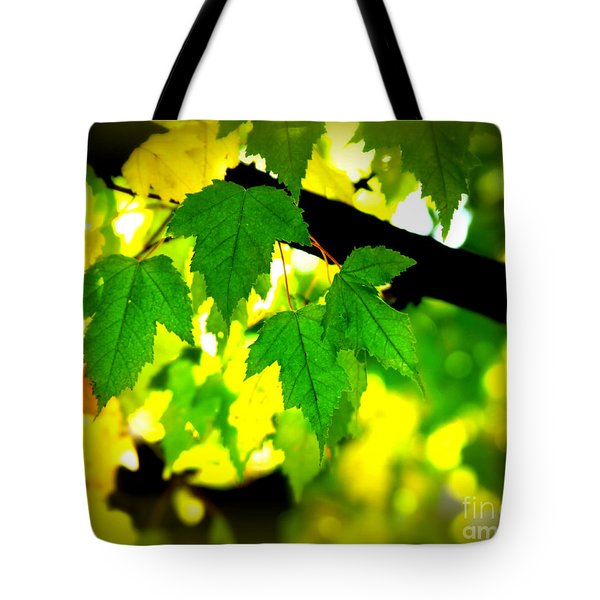 Morning  Light Tote Bag by Perry Webster
