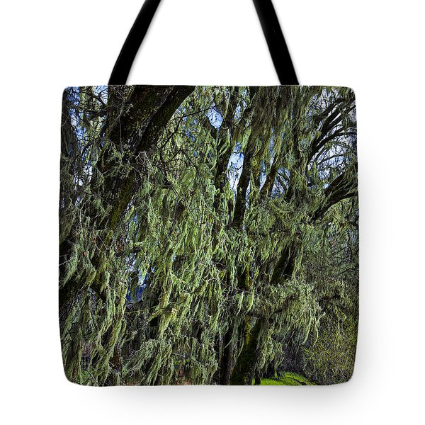Moss Covered Trees Tote Bag by Garry Gay