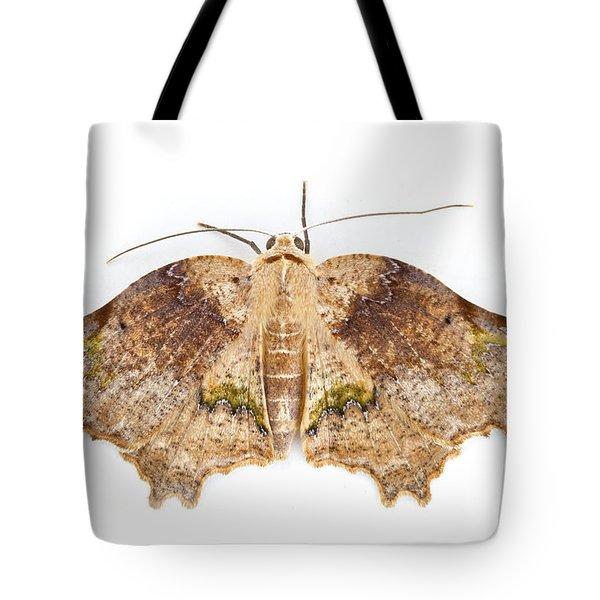 Moth Braulio Carrillo Np Costa Rica Tote Bag by Piotr Naskrecki