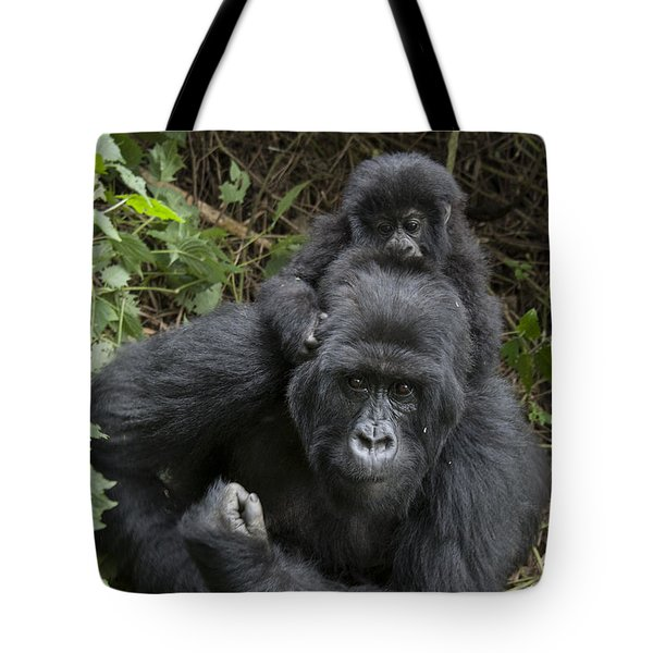 Mountain Gorilla Mother And 1.5yr Old Tote Bag by Suzi Eszterhas