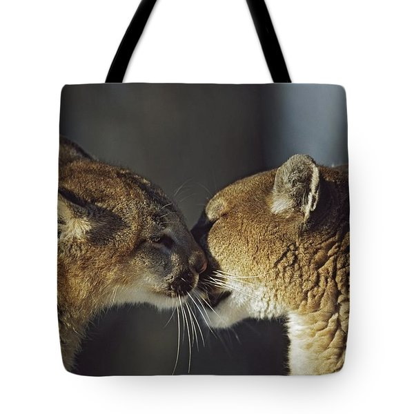 Mountain Lion Felis Concolor Cub Tote Bag by David Ponton