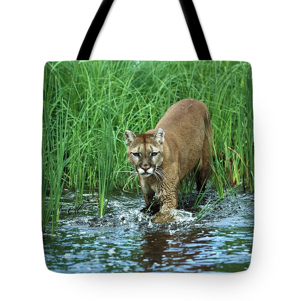 Mountain Lion Puma Concolor Wading Tote Bag by Konrad Wothe