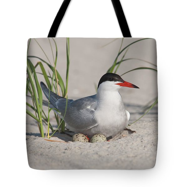 Nesting Common Tern Tote Bag by Clarence Holmes