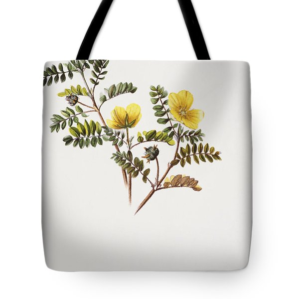 Nohu Flower - Vintage Tote Bag by Hawaiian Legacy Archive - Printscapes