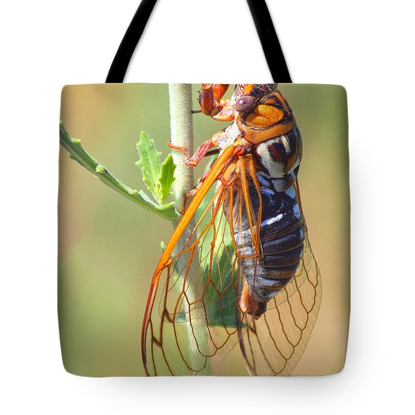 Noisy Cicada Tote Bag by Shane Bechler