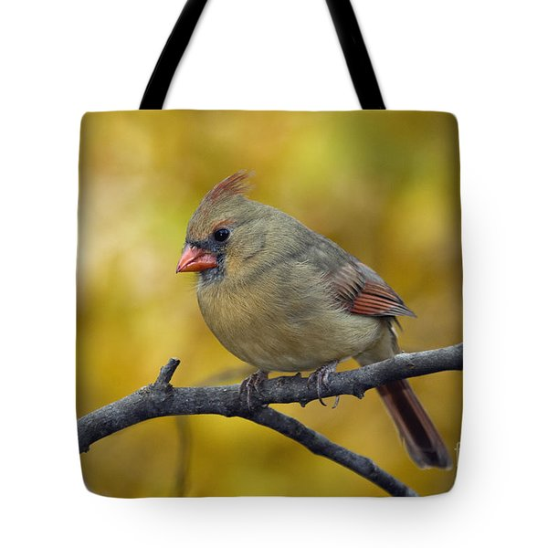 Northern Cardinal Female - D007849-1 Tote Bag by Daniel Dempster