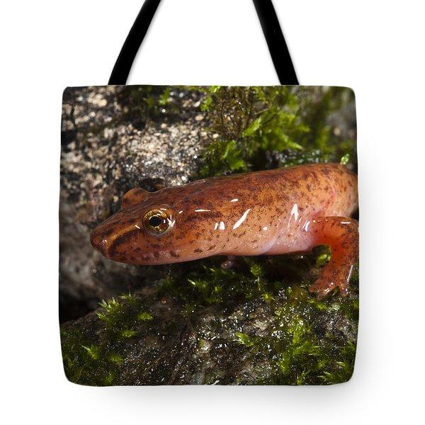 Northern Spring Salamander Gyrinophilus Tote Bag by Pete Oxford