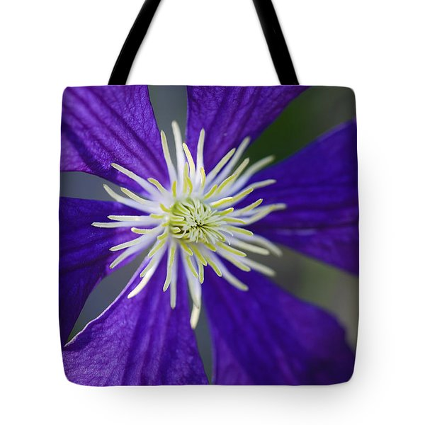 Not Shy Tote Bag by Rich Franco