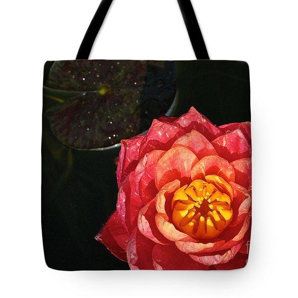 Nymphaea Tote Bag by Susan Herber
