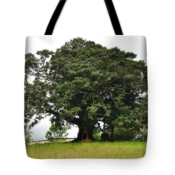 Old Fig Tree - Ficus Carica Tote Bag by Kaye Menner