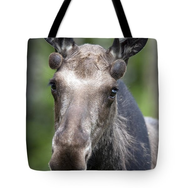 One Year Old Bull Moose With Growing Tote Bag by Philippe Henry