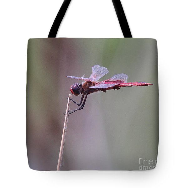 Open Mic Night At The Swamp Tote Bag by Robert Frederick