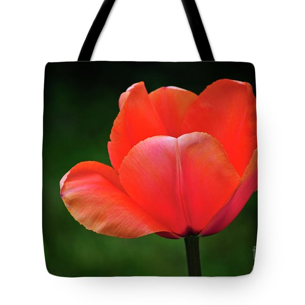 Opened Red Tote Bag by Agrofilms Photography