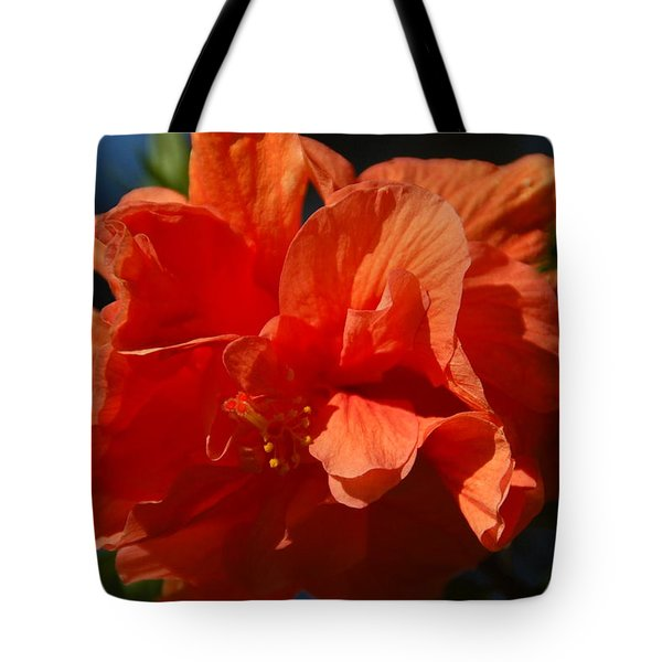 Orange Hibiscus Tote Bag by Aimee L Maher Photography and Art