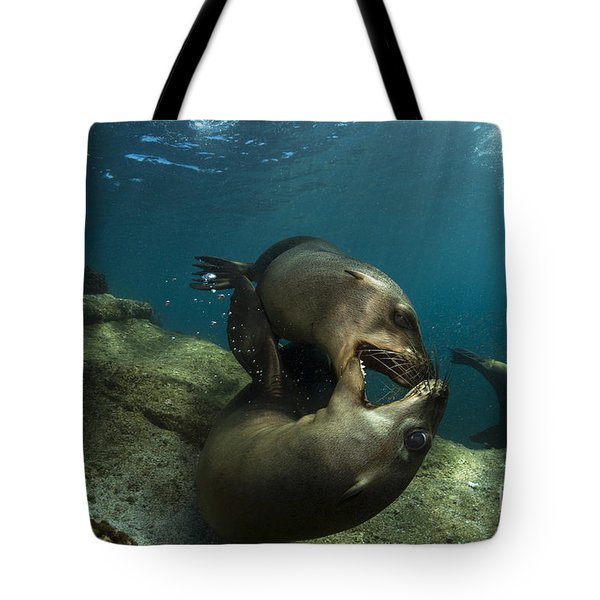 Pair Of Playful Sea Lions, La Paz Tote Bag by Todd Winner