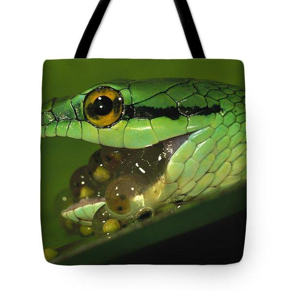 Parrot Snake Eating Tree Frog Eggs Tote Bag by Christian Ziegler