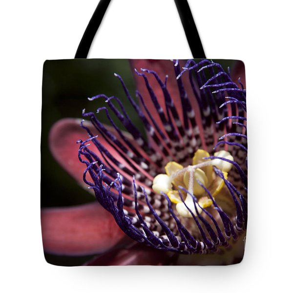 Passiflora alata - Winged Stem Passion Flower - Ruby Star - Ouvaca Tote Bag by Sharon Mau
