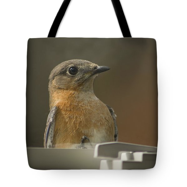 Peeping Bluebird Tote Bag by Kathy Clark