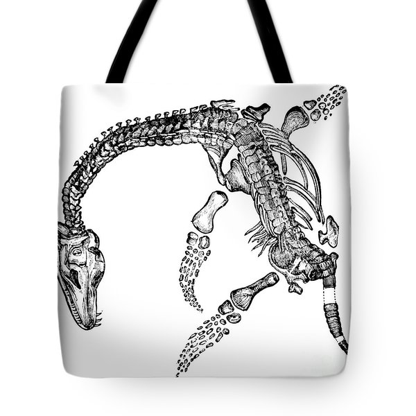 Plesiosaurus Tote Bag by Science Source