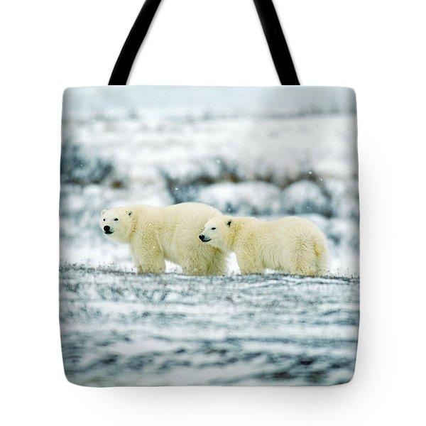 Polar Bears, Churchill, Manitoba Tote Bag by Mike Grandmailson