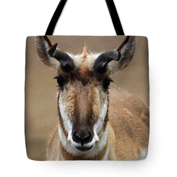 Pronghorn Tote Bag by Karol Livote