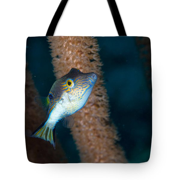 Puffer Profile Tote Bag by Jean Noren