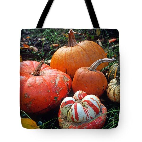 Pumpkin Patch Tote Bag by Kathy Yates