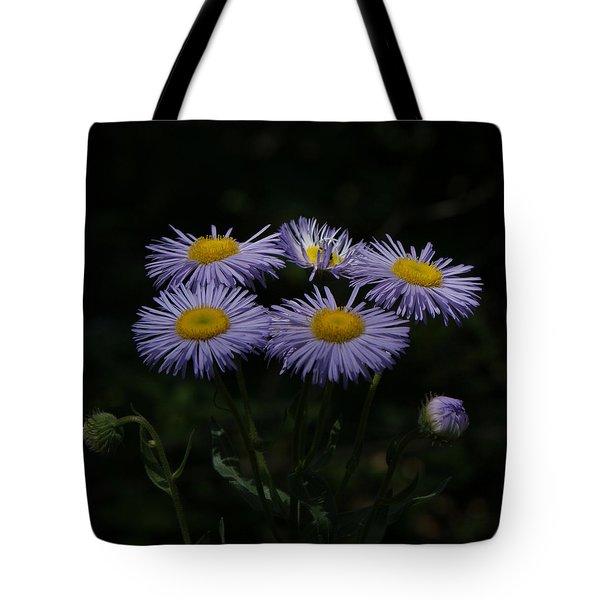 Purple Asters Tote Bag by Ernie Echols
