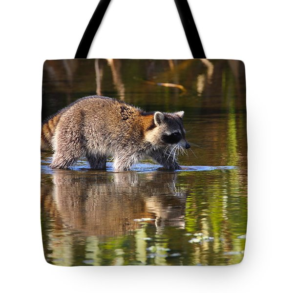 Raccoon Foraging  Tote Bag by Bruce J Robinson