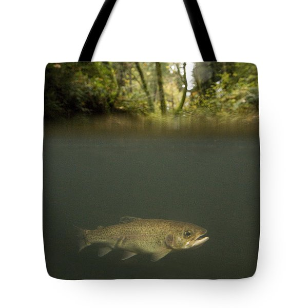 Rainbow Trout In Creek In Mixed Coast Tote Bag by Sebastian Kennerknecht