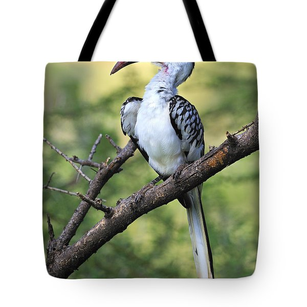 Red-billed Hornbill Tote Bag by Tony Beck
