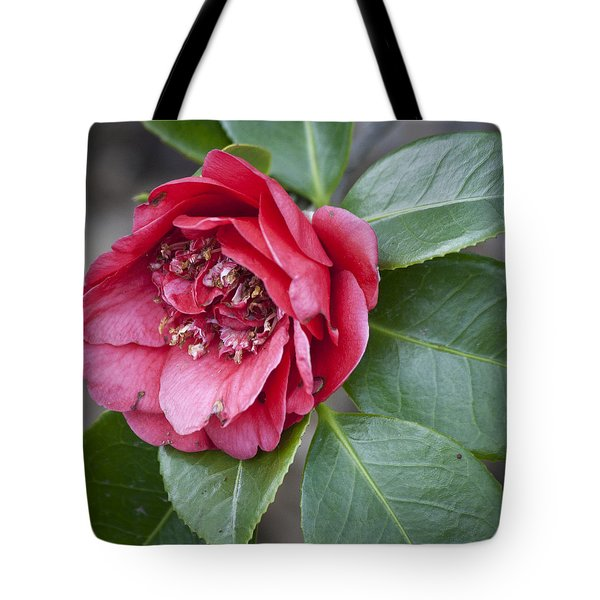 Red Camellia Squared Tote Bag by Teresa Mucha