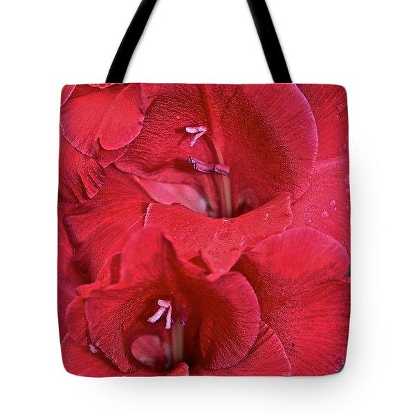 Red Gladiolus Tote Bag by Susan Herber