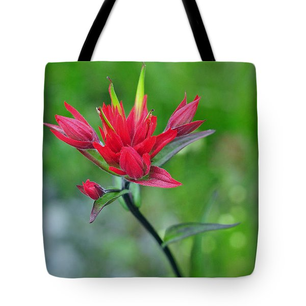 Red Indian Paintbrush Tote Bag by Lisa  Phillips