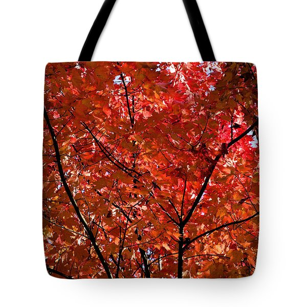 Red Leaves Black Branches Tote Bag by Rich Franco