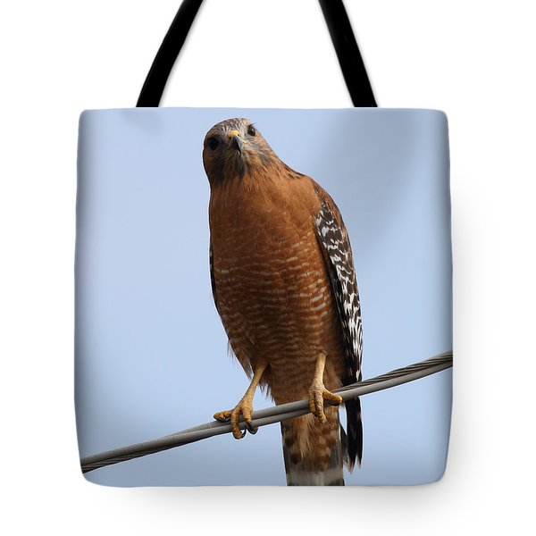 Red-shouldered Hawk . 7d10254 Tote Bag by Wingsdomain Art and Photography
