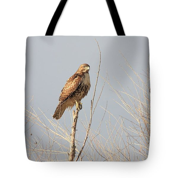 Red Tailed Hawk 20100101-5 Tote Bag by Wingsdomain Art and Photography