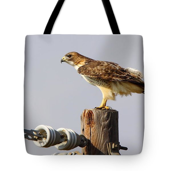 Red Tailed Hawk Perched Tote Bag by Robert Frederick