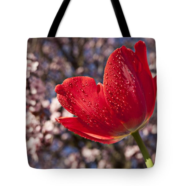 Red Tulip Against Cherry Tree Tote Bag by Garry Gay