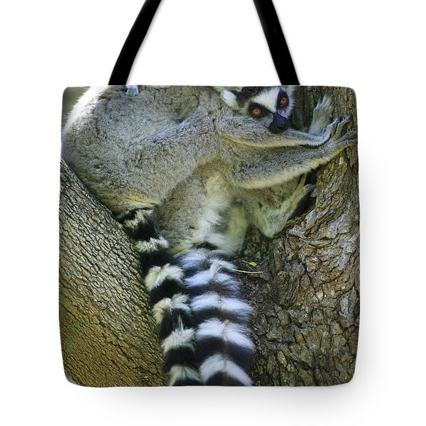 Ring-tailed Lemurs Madagascar Tote Bag by Cyril Ruoso