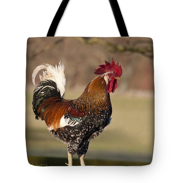 Rooster Gallus Gallus Northumberland Tote Bag by John Short