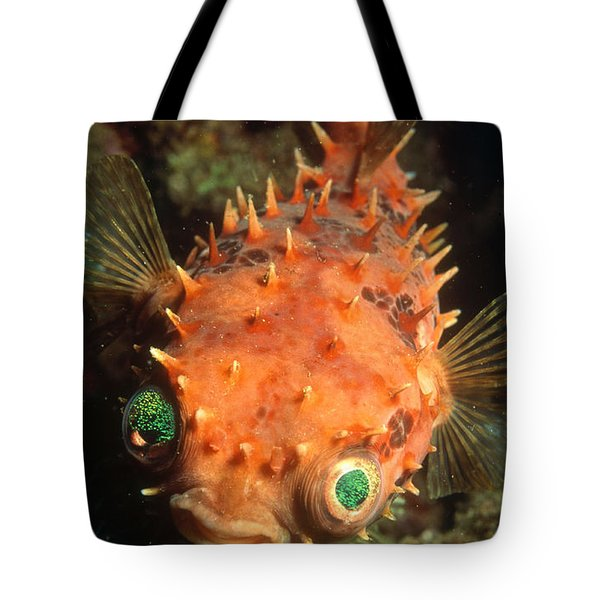 Rounded Porcupine Fish Tote Bag by Nature Source