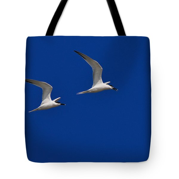 Sandwich Terns Tote Bag by Tony Beck