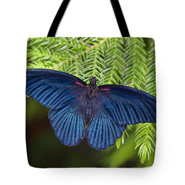 Scarlet Swallowtail Tote Bag by Joann Vitali