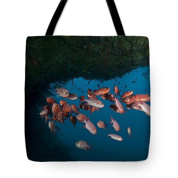 School Of Red Bigeye Under A Rocky Tote Bag by Mathieu Meur